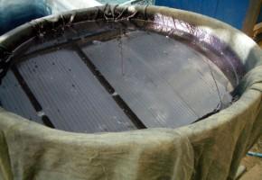 蓼藍を水槽に入れる